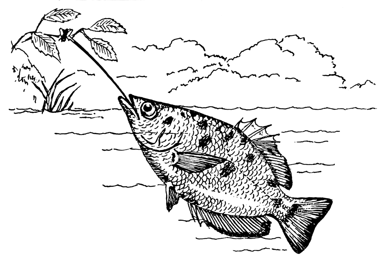 1280px-Archerfish_(PSF).png